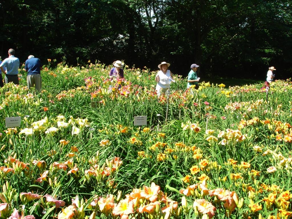 Herr_Tour_Gardens033. American Hemerocallis Society ...
